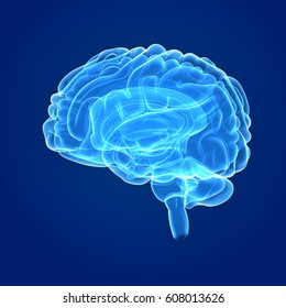 Human Brain lateral view 3d illustration