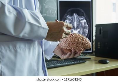 Human brain model on doctor hand. Doctor using pencil to demonstrate brain anatomy. Background of MRI brain.