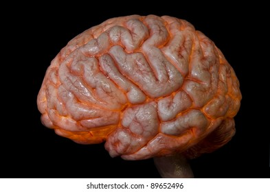 Human brain nd spine lateral  isolated on black background