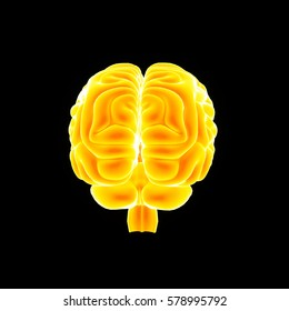 Human Brain posterior view 3d illustration
