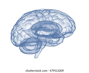 Human brain side view  isolated on white background. 3d render