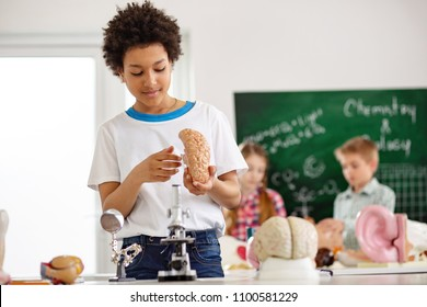 Human brain. Smart young boy holding a brain model while studying it