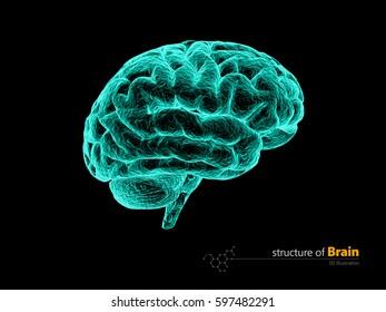 Human brain, x-ray, anatomy structure. Human brain anatomy 3d illustration.