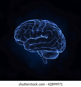 Human brain x-ray left view