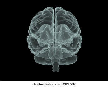 """human brain in """"x-ray"""" style, front view"""