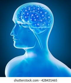 Human brain x-ray view 3D rendering