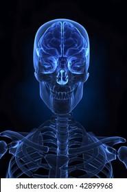 Human brainx-ray  top view