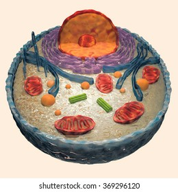 Human Cell Model Top
