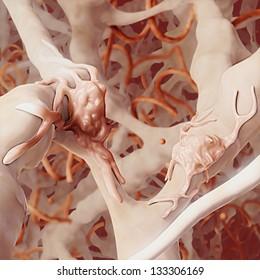 Human Collagen / Elastin Matrix