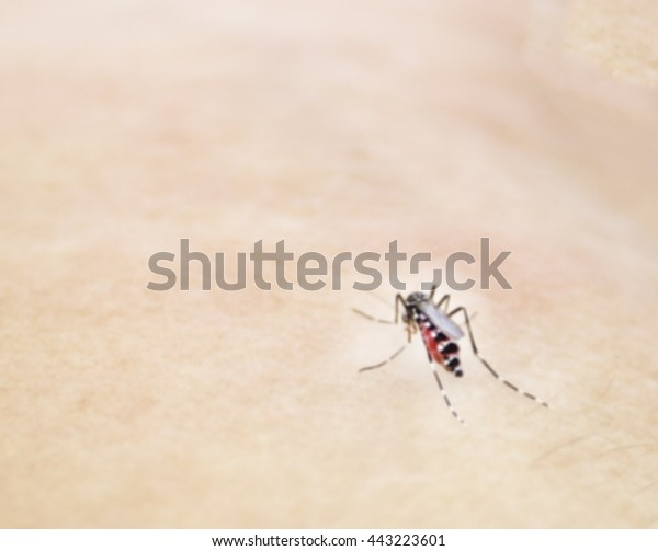 Human Dlood Macro Fly Gnat Hair Stock Photo (Edit Now) 443223601