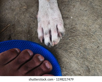 Human and dog legs