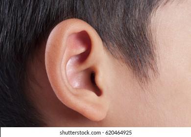 Human ear closeup.