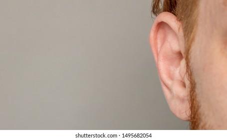 human ear close-up  macro shot shot