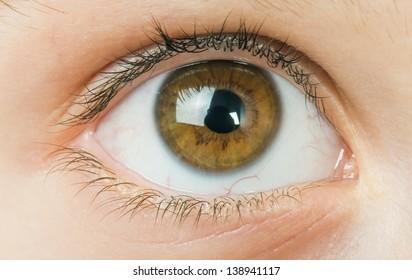 Human eye close up studio shot. Child eye.