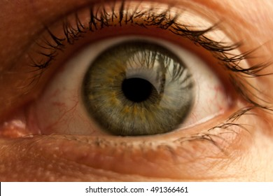 Human eye closeup.