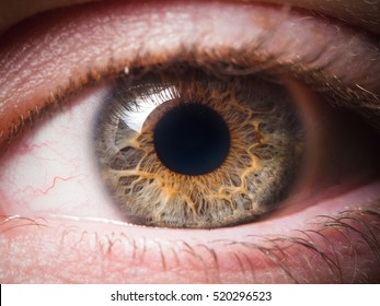 Human eye close-up