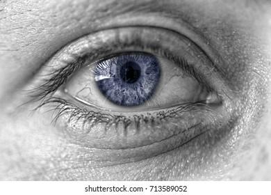 the human eye closeup. blue pupil