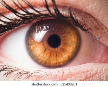 Human eye close-up detail
