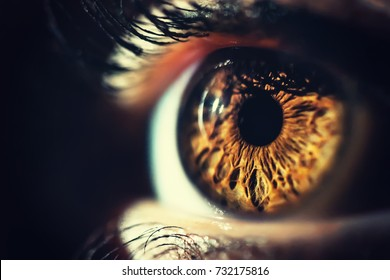 Human eye iris close up - Shutterstock ID 732175816