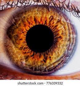 Human eye iris close up