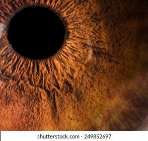 Human eye macro closeup