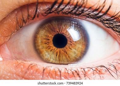 Human eye medical detail