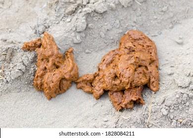 human feces in nature on the sand