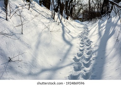 Human feet traces in the snow. Footprints alley through the snow. Winter background. Snow-covered nature. Wandering alone. Snow pathway.