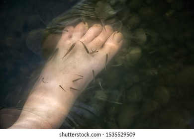 human feet in the water. fish swim around the legs and clean the skin. rocks and silt at the bottom of the river. bad ecology