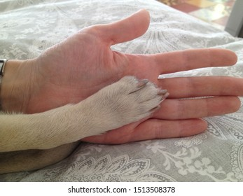 Human female hand connects with small dog friend paw. Human and dog hold hands in friendship