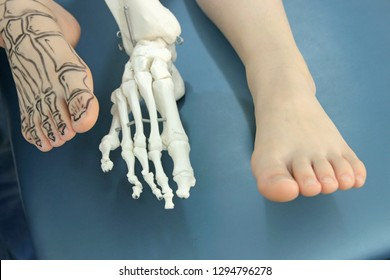 human foot with drawing bones on the skin, foot without drawing,and model of human foot - comparison