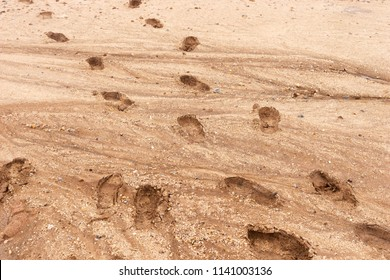 Human footprints in the brown sandy ground