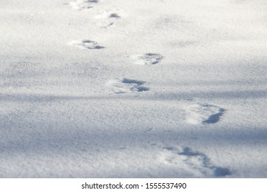 Human footprints on pure white snow in winter