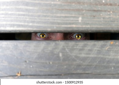 Human frightened look! Wide open eyes of a person who is peeping or is in custody. Espionage, surveillance, peeping.