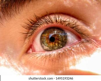 Human green & brown eye looking away to the left. Sun light.