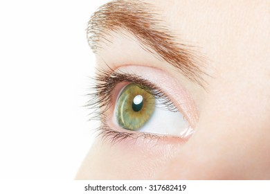 Human, green healthy eye macro with white background, vision concept