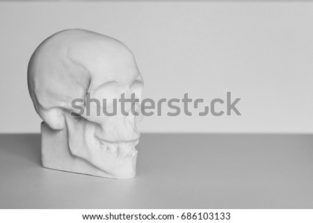 Human Gypsum Skull Study Anatomy Artists Stock Photo Edit Now
