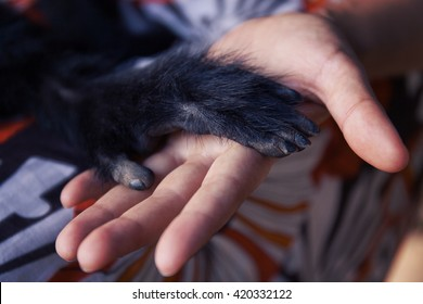 Human hand and Black Spider monkey paw. Handshake. Friendship of person and animal. Protection of endangered animals.