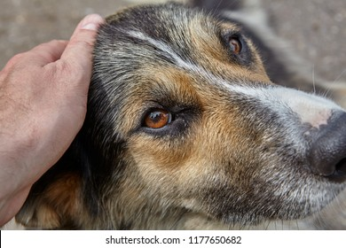 Human hand caresses dog, stroking it on head, close-up.