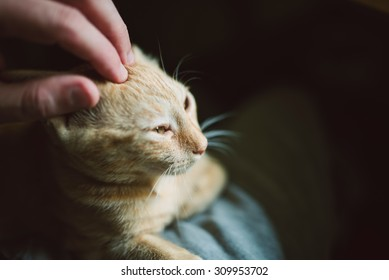 Human hand caressing a kitten at home