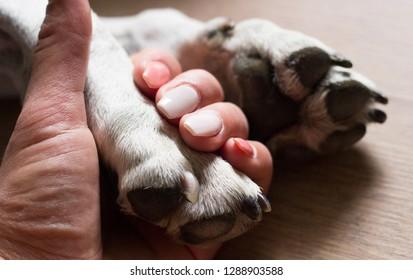 Human hand and dog paw