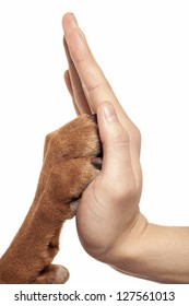 human hand and dog paw touching each-other in high five