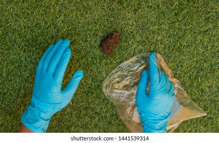 human hand in gloves cleaning natural garden green grass meadow space for walking with pets from animal shit, environmental and landscaping cleaning concept wallpaper background photography