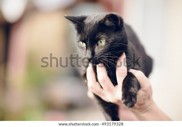 human hand holding a black cat
