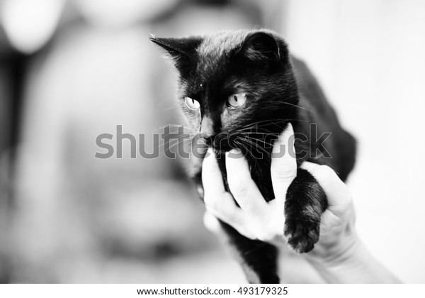 human hand holding a black cat,black and white photography