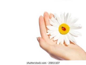 Human hand holding daisy with ladybug on it