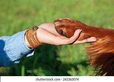 Human hand holding dog's paw