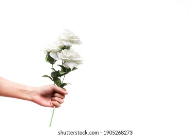 human hand holding fake artificial white roses isolated on white background to symbolize love in valentine's day with copy space