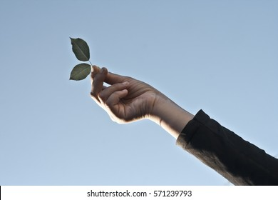 Human hand holding leaves. The Concept of  green earth.