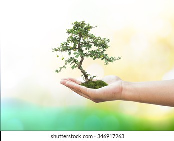 Human hand holding medium green plant with soil on blurred abstract. Ecology, World Environment, Tree of Knowledge concept.